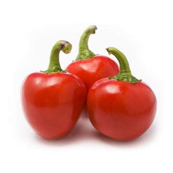 Finger Short or Bulb shape Chillies Exporters in India