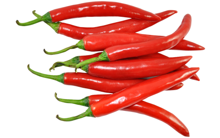 Bulb Chillies exporters in India